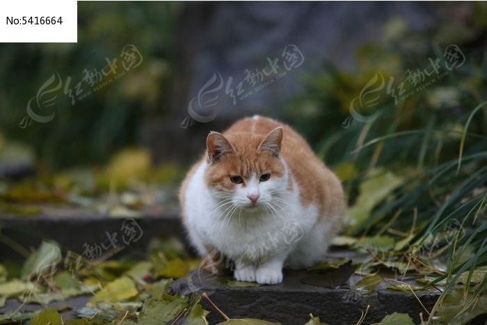 爱思考的小花猫图片