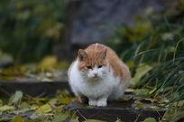 爱思考的小花猫