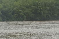 河流与树林相间