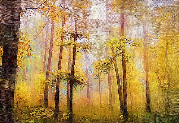 电脑油画《秋天的森林》