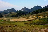 收货的稻田