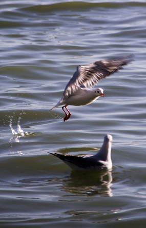 海鸥的交流