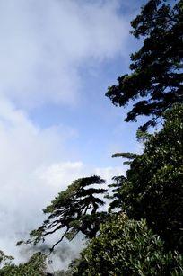 五指山山顶自然风光