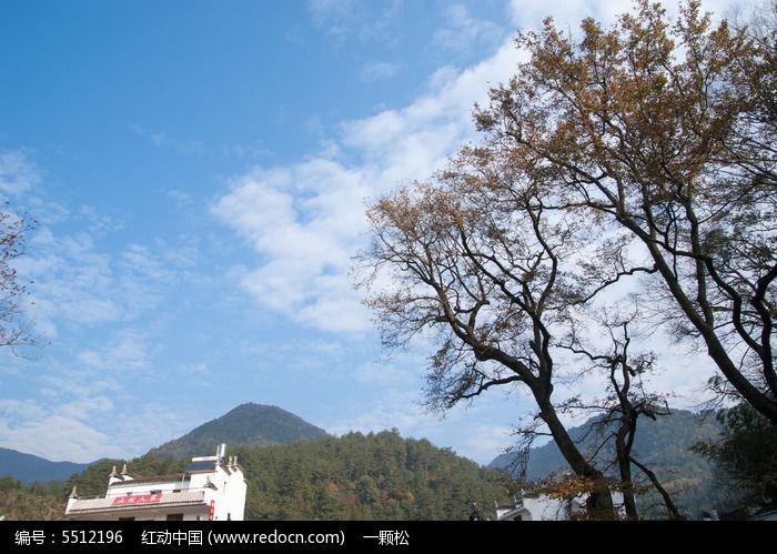 婺源的红枫树图片