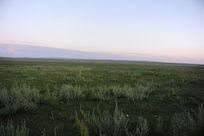 清晨草原上的绿草