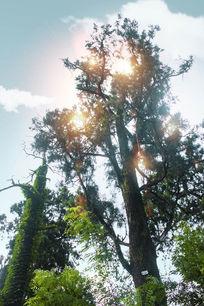 树叉间的阳光
