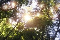 唯美阳光树林