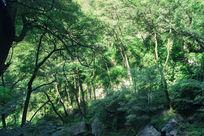 阳光照进树林