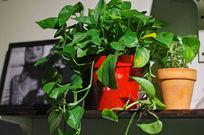 盆栽绿色植物