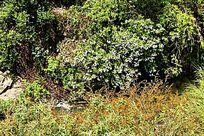 腾冲热海景区的野花野草