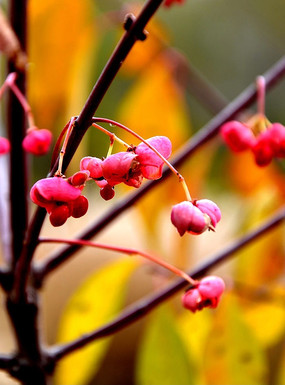 秋天的果实