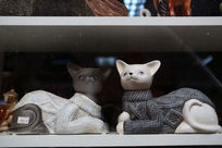 穿毛衣蹲坐的黑猫和白猫