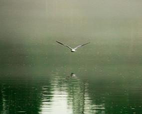 雨中飞翔的鸟