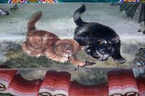 黑猫和黄猫戏蝴蝶图案线条边框