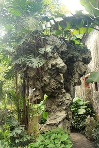 石上根须植物