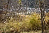 青岛中山公园的草丛