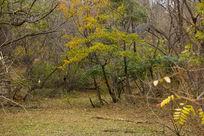 青岛中山公园园林风景