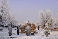 景区里的雪松
