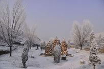 龙口景区里的雪松