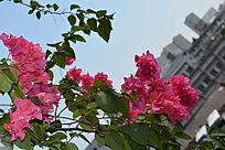 美丽的红花
