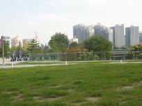 公园里的草地