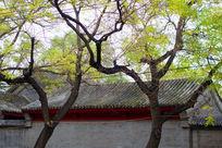 老北京四合院民居