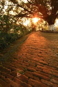 清晨阳光下的意境小路