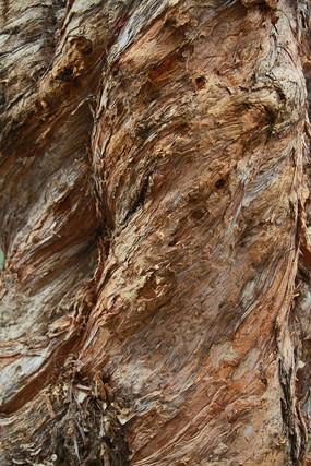 白千层树纹理树皮