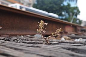 长在铁轨旁边的小树枝