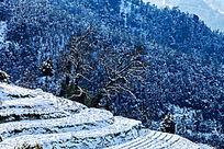 冬雪里的金龙山梯田风光