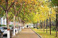 秋天的城市人行道