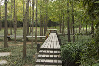 木栈道风景