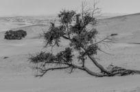 长歪了的树