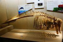 海豚骨标本