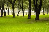 树林中的绿草