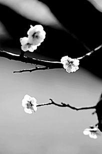 梅花与树枝