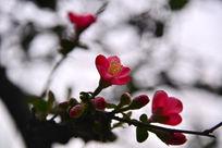 公园生长的植物花卉