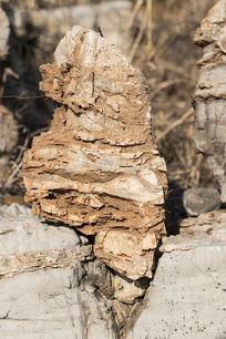 长尾巴狸猫形奇石