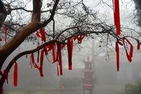 秋雨中的黄华山寺