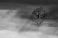 云雾中的树