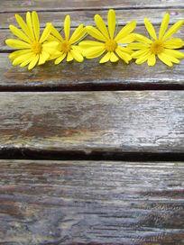 4朵小雏菊