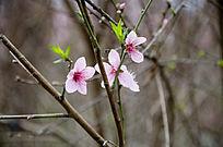 粉红色花图片
