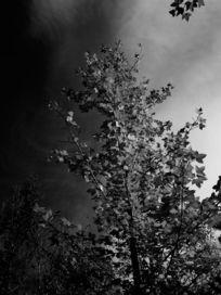 树枝树叶老照片