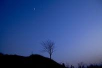 月色下的树