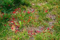 草丛中的花瓣图片