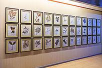 华佗中医药文化博物馆中药标本展示