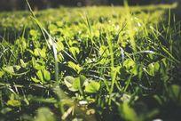 初春的绿色嫩草