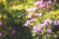 绿色草丛里开出的淡紫色小花