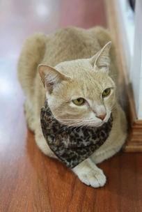 带围巾的灰色小猫