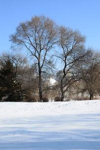冬季美丽的树木